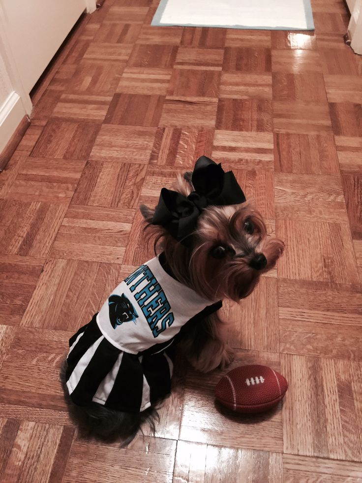 Buttons Carolina Panthers Cheerleader!