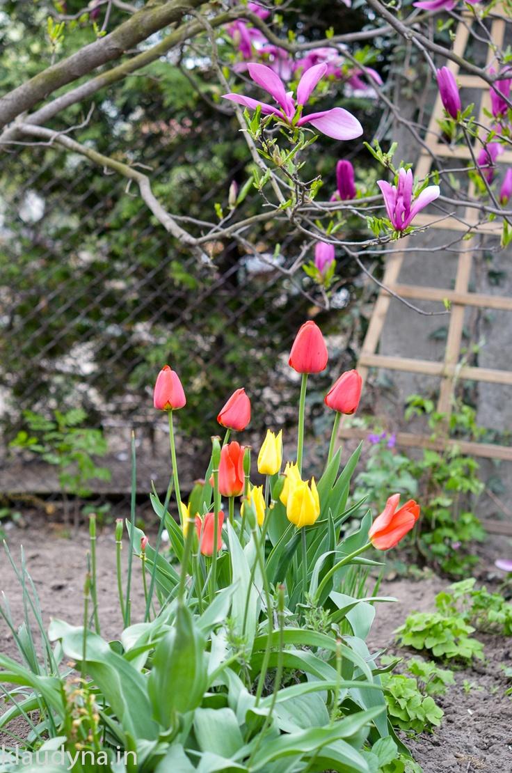 May in my Grandmas' garden.
