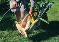 Harvesting Tools - Hobby Farms
