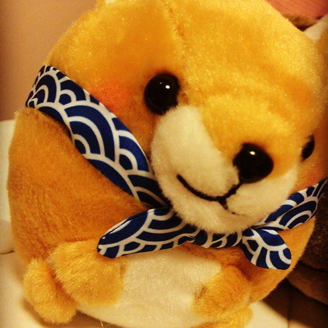 皆様、おはようございます( ⁎ᵕᴗᵕ⁎ )⁾⁾ 今日もお仕事頑張りましょうヽ(*^∇^*)ノ  昨日、新たにパグ蔵のお仲間が加わりました!!名前は豆柴なので「豆助」と命名致しました( ⁎ᵕᴗᵕ⁎ )✨ 皆様、今後ともパグ蔵と豆助を宜しくお願い致します(*´▽`*)笑  #cute #beauty #pretty #japan #japanese #photo #love  #girl #follow #followme #follow4follow #followforfollow #followback #music #いいね返し #いいね #愛犬 #犬 #女子力 #可愛い #おしゃれ #写真 #写真部 #写真好き #写真好きな人と繋がりたい #女の子 #豆柴 #豆助