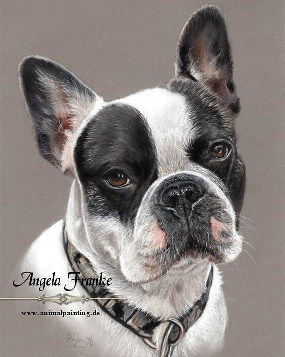 Angela Franke On Instagram Ready French Bulldog In Pastel 8 X 12 Inches Commission Work Fertig Franzosische Bulldo Dog Sketch Pet Portraits Dog Paintings
