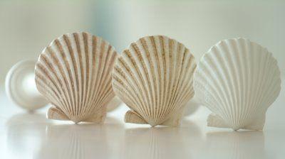 coastal curtain rods - tie backs, diy using door stop and shell
