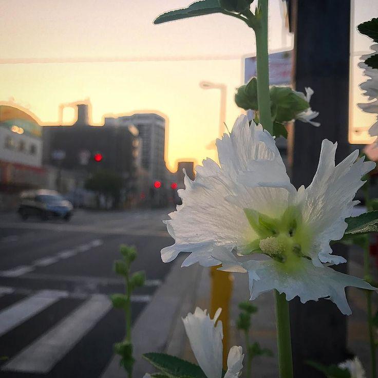 本日は第6回関西チャリティ100km歩こうよ大会  武庫川河川敷から 姫路城までの100kmを 30時間かけて歩く催しで  私は去年 奇跡的な完歩を遂げました  去年歩いてなかったら 私は今ここにいないかも  今年はサポートとして 第2 第4 チェックポイント そしてゴールで 徒歩のみんなをお迎えします  待ってるよ  #おはよう #絶対やる #100kmjp #関西100km #未来は自分でつくる #ともに歩もう #思いはひとつ