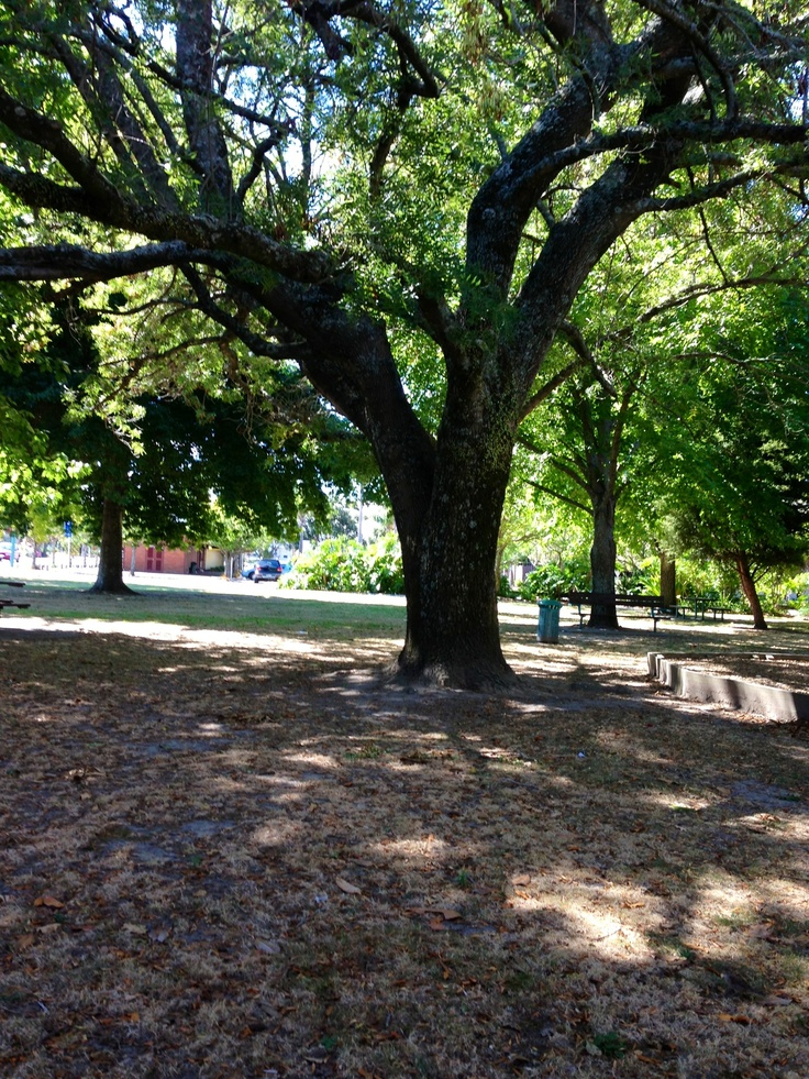 Park between The Police Station, Exhibition Centre and the Boon Street Bus Stop, Whakatane. March 2013