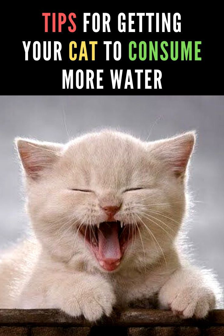 10 Ways To Get Your Cat To Drink More Water Funny Cats Cats Funny Cat Videos