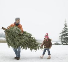 How To Make Homemade Christmas Tree Food: Keep your tree alive by adding a preservative to its water that you can make yourself using common household ingredients.