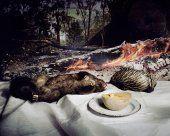 'Possum and Echidna with Log' 2006