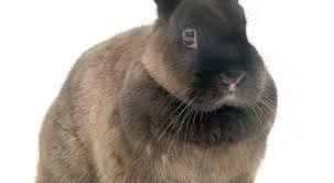 Afbeeldingsresultaat voor grappig konijn