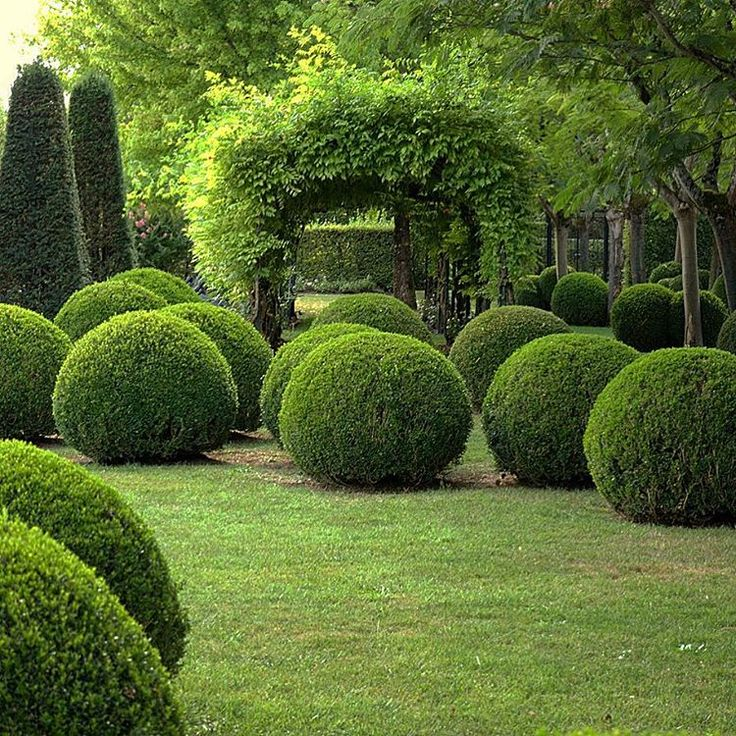 The garden at Le Vieux Logis in the Dordogne, France. These Buxus spheres are so…