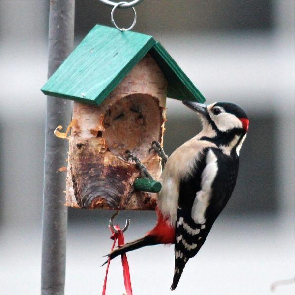 Vogelfutter wie Fettfutter und Weichfutter selber machen-Vogel- und Naturschutzprodukte einfach online kaufen