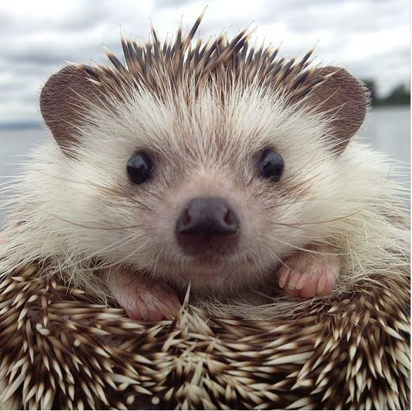 I have such a soft spot for these spikey little creatures