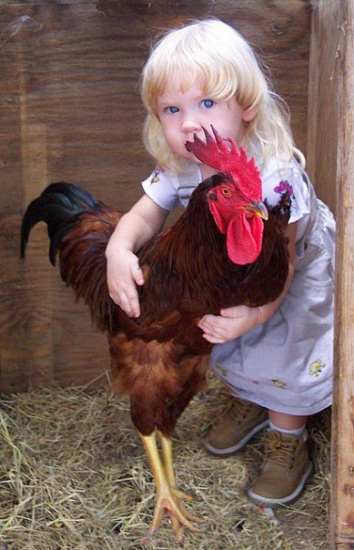 cute chicken coops | Too Cute -- A chicken coop for Heather's chickens