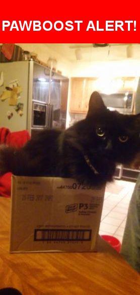Please spread the word! Booboo Kitty was last seen in St. Louis, MO 63130.    Nearest Address: Near Enright Ave & Skinker Blvd N