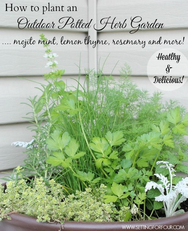 17 Best Images About Gardening Tips And Ideas On Pinterest: 17 Best Images About *** DIY Creative Ideas *** On