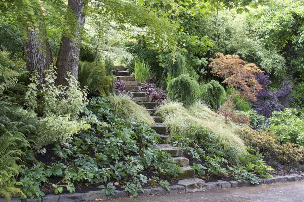 This steep hillside faces the front door of our clients' house, wrapping the entry area in foliage-centric planting and overpowering the broad driveway.