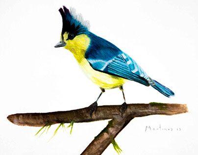 "Check out new work on my @Behance portfolio: ""Pájaro azul y amarillo. 30 x 40 cm. Acuarela."" http://be.net/gallery/50940647/Pajaro-azul-y-amarillo-30-x-40-cm-Acuarela"