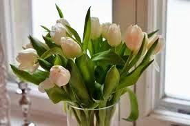 Terima kasih anda telah berkunjung ke halaman kami, kami melayani order jual bunga tulip,  http://preweddingevent.blogspot.co.id/2015/04/jual-bunga-tulip.html