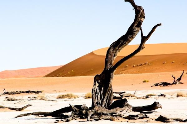 The Deadvlei salt pan in Namibia - http://www.ventureso.me/namibia/ -#namibia #dunes #deadvlei #africa #travel #safari