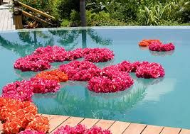 Image result for floating pool flowers