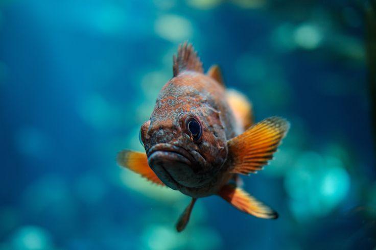 Bienvenue dans la catégorie Aquarium de notre Pinterest. Découvrez tous les accessoires aquarium que vous propose My-Animalerie.com. #poisson #aquarium #animalerie  Photo by Marius Masalar