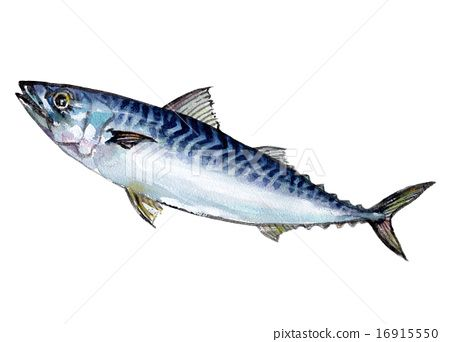 painting a mackerel - Google Search