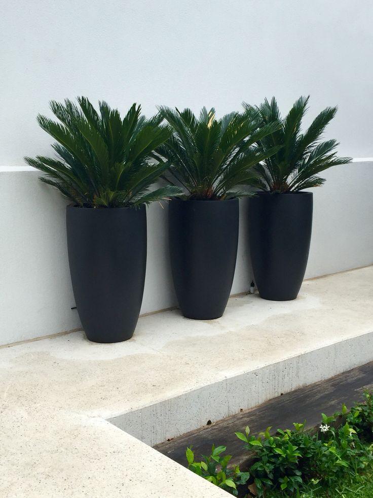 Planters | Tall matt black planters with Cycads | Nadia Gill Landscape Architect