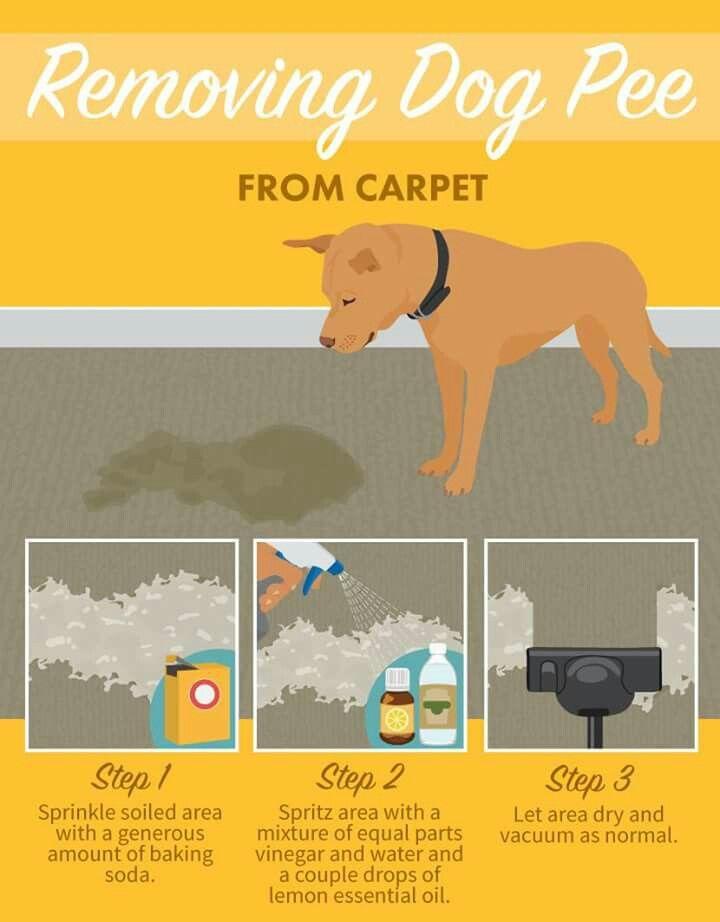 25 Best Ideas About Dog Pee On Pinterest Dog Urine