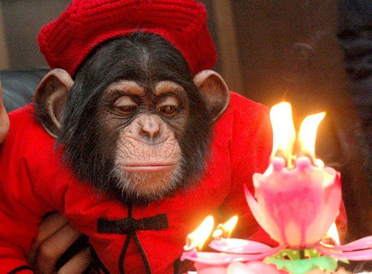 Днем рождения, обезьянки в открытках