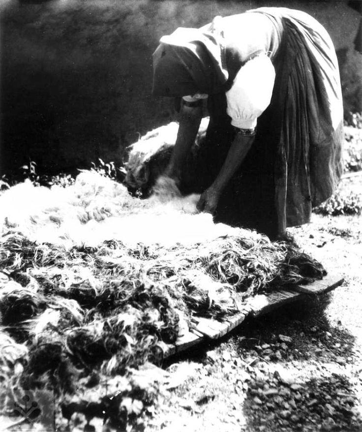 Sušenie vypranej vlny rozloženej na doskách. Žakarovce (okr. Gelnica), 1954-1955. Archív negatívov Ústavu etnológie SAV v Bratislave. Foto F. Hideg.