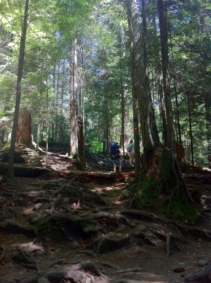 Deep Cove Trail