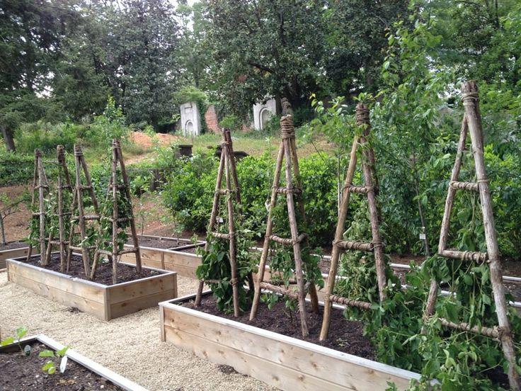 Blackberry trellis idea pinned from danielle rollins for Vegetable garden trellis designs