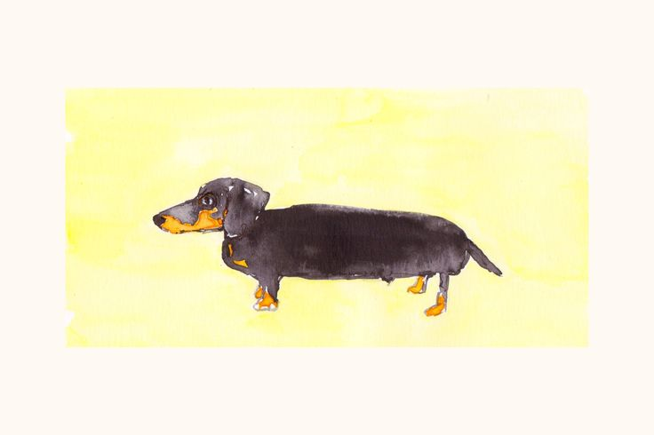 Dachshund dog is available on my Etsy #dachshund #dachshunddog #funnydachshund #dachushundart #dog #dachundchristmas