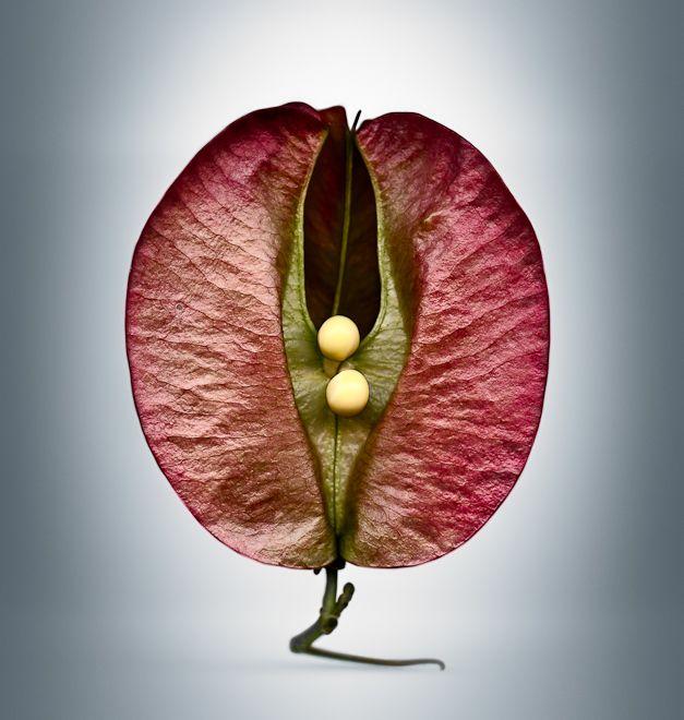 SvjetlanaTepavcevicMeans_15    La fascinante belleza de las semillas (micro-modelos de reproducción cósmica)