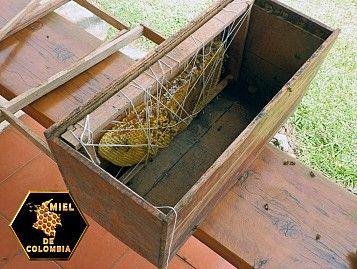 Miel de Colombia Fundación | Bienvenido | miel, miel pura, miel de abejas, cera de abejas, rescate de abejas, propoleo, polen, jalea real, abejas africanas, jabones naturales, jabones artesanales, jabones de miel, miel de colombia, venta de miel, miel 100% pura, colmenas perone, apirios naturales, apicultura natural, sos abejas, apicultorcitos, apicultores