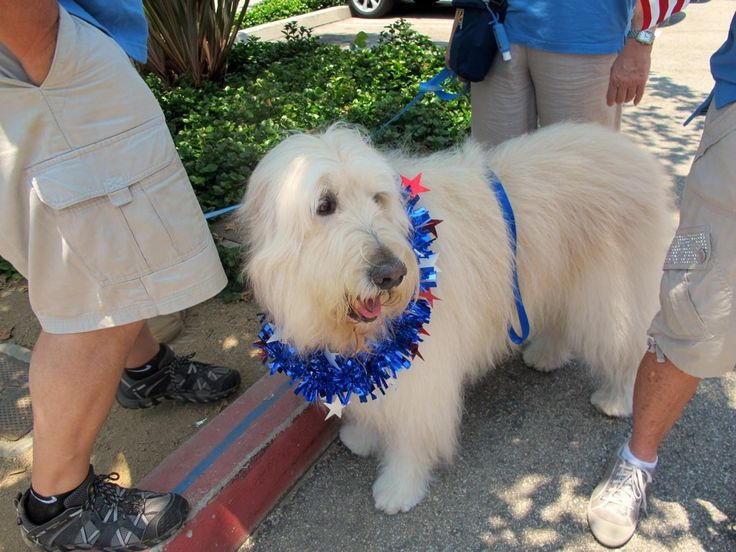 UCLA PAC Volunteer, Madison, is looking pretty cute in her red, white and blue