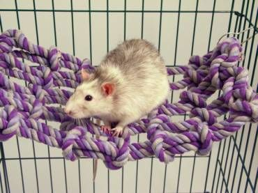 Cargo Net Toy - maybe make this instead of hammocks because they DESTROY THEM