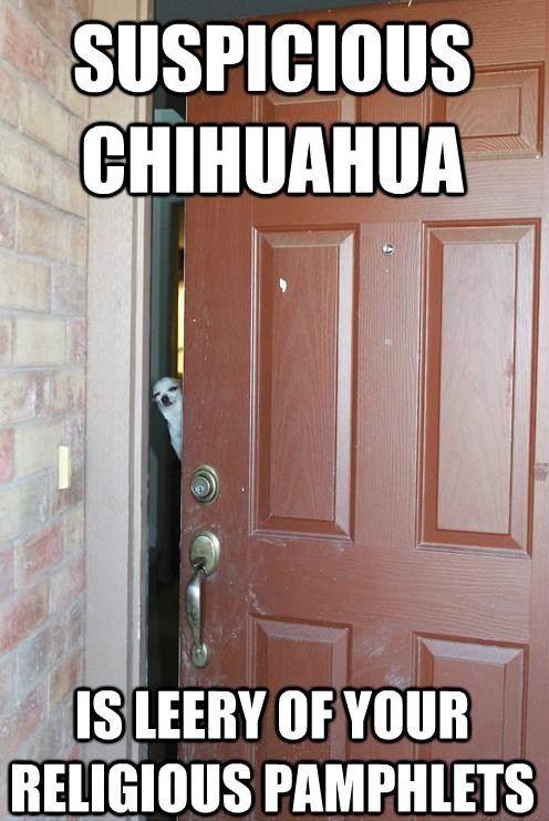 suspicious chihuahua...he's leery