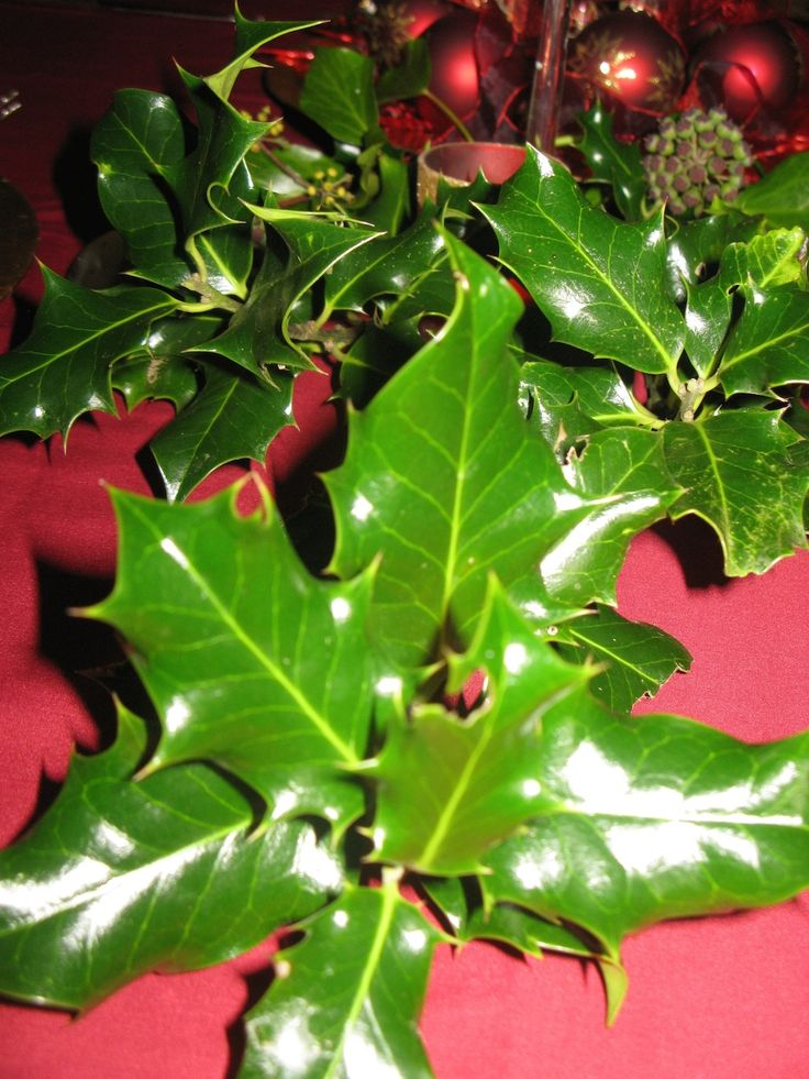 I love using fresh foliage to decorate the Christmas table - just make sure you cut either your own or ask permission and ensure that it is clean