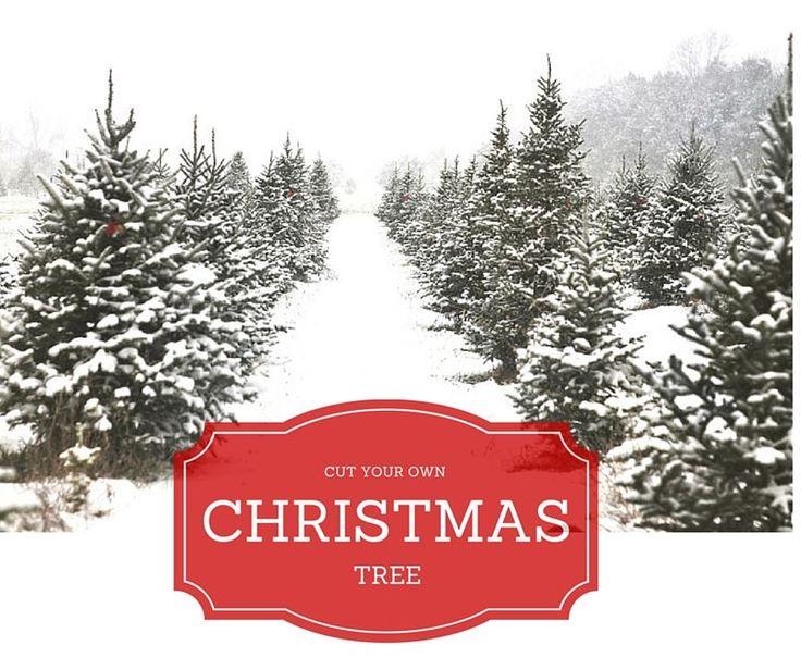 Place near Milton to get a Real Christmas Tree. Milton Real Estate Agent, Katherine Barnett, Broker