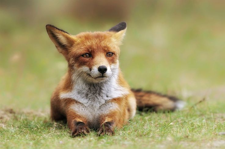 Fox look by Victor Carpentier on 500px