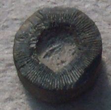 A favorite past time along the shoreline beaches of Lake Michigan is looking for crinoid fossils. The other day I found one with a star shaped hole in the center. Here's a bit about crinoids.