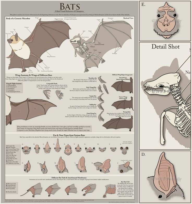 Animal Dissection | Free Essays - PhDessay.com