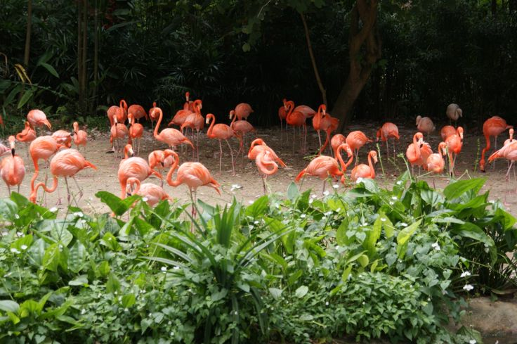 Jurong Bird Park, Singapore October 2011