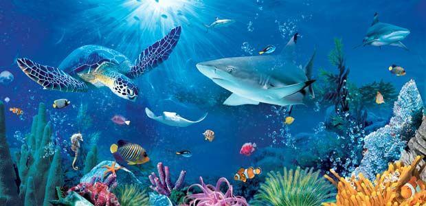 sea animals - Google Search | Sea animals | Pinterest | Parks ...
