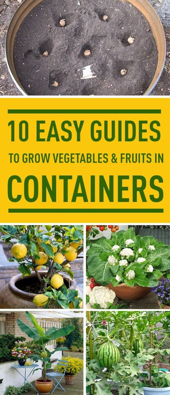 Don't have a garden? No problem. Follow these easy guides to grow various…
