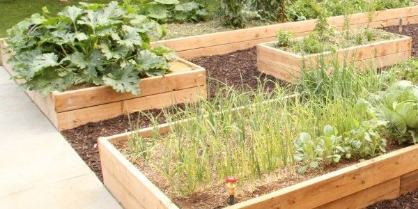 Summer isn't over just yet! Our friend Cassity at @Remodelaholic .com  shares her Raised Garden project and shows how to go from planning to #planting in these last few weeks of the season! #garden