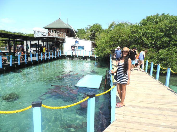 Islas del Rosario,Cartagena Colombia.En esta isla puedes disfrutar de hermosos acuarios donde puedes observar diferentes seres del mar, o puedes ir a caretear a las zonas de los arrecifes de corales.