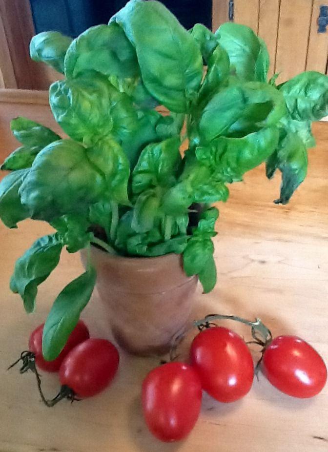 Basil and Tomatoes - Good Companions
