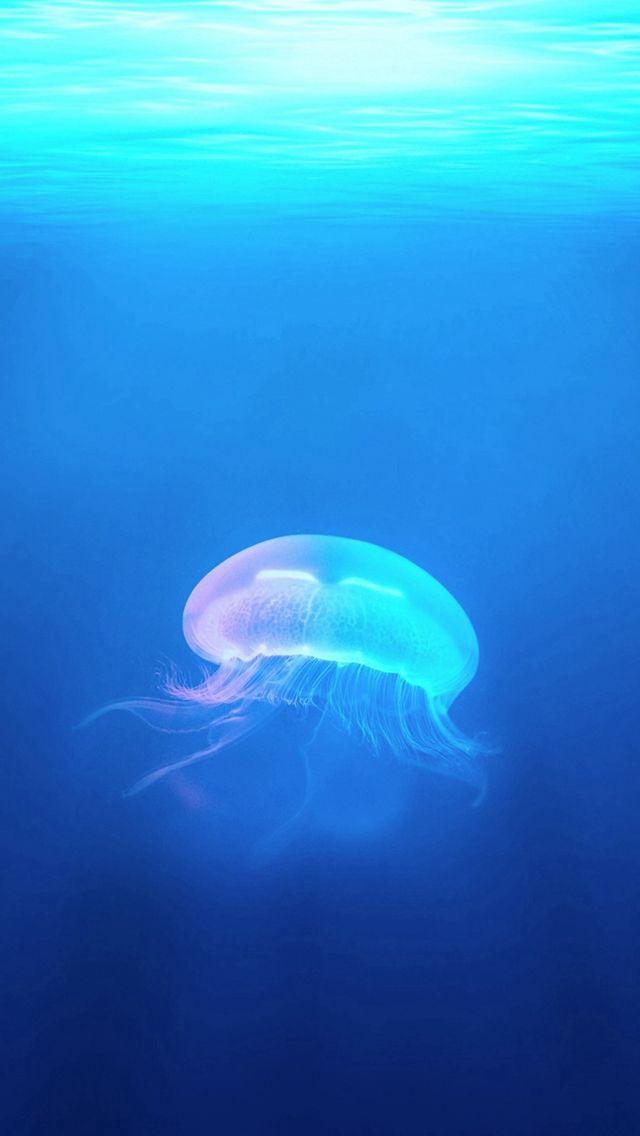 Ocean Jellyfish Surreal Light #iPhone #5s #wallpaper