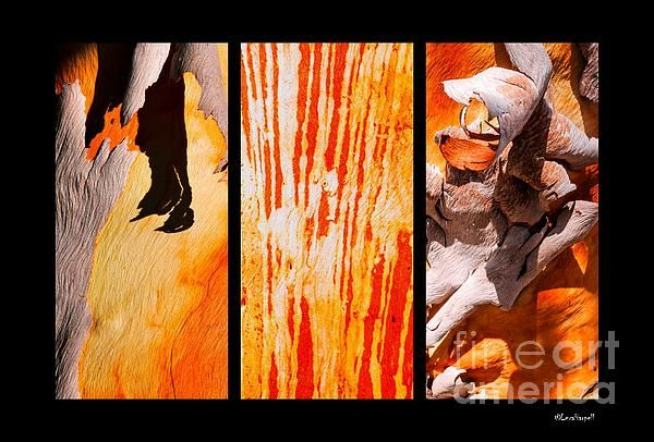 Salmon Gum Tree Bark Triptych. Australian Tree Bark Series by Lexa Harpell. A collection of Aussie tree bark images. Taken from my travels around Australia. Add a splash of COLOUR and UNIQUE LOOK! Visit my photo gallery and get a beautiful Fine Art Print, Canvas Print, Metal or Acrylic Print OR Home Decor products. 30 days money back guarantee on every purchase so don't hesitate to add some AUSTRALIAN INTIMACY in your home.
